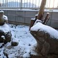Photos: 雪化粧-庭の動物たち-