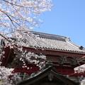 山寺の春2