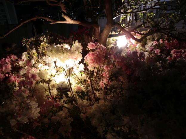 night flower