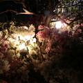 Photos: night flower