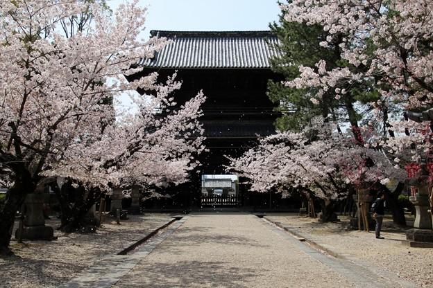 岡崎 大樹寺