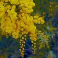 Photos: 花粉症の方には・・・
