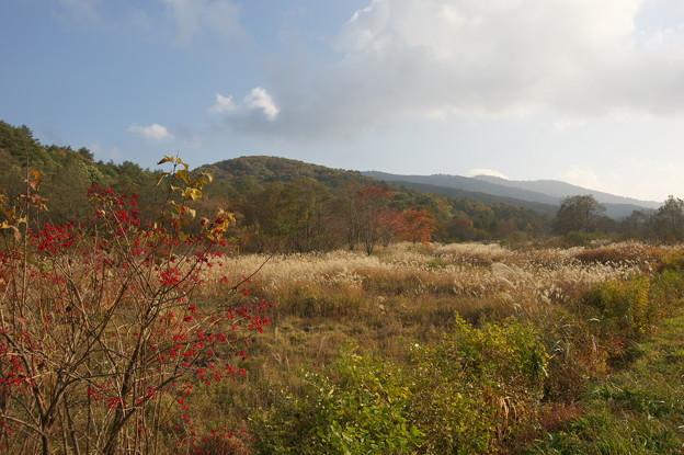 秋の霧ヶ谷湿原
