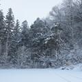 写真: 2月12日雪景色