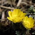 写真: 春の訪れ