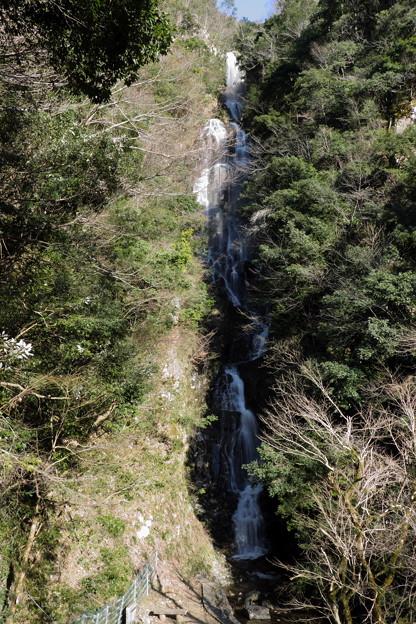 早春の流れ(常清滝)