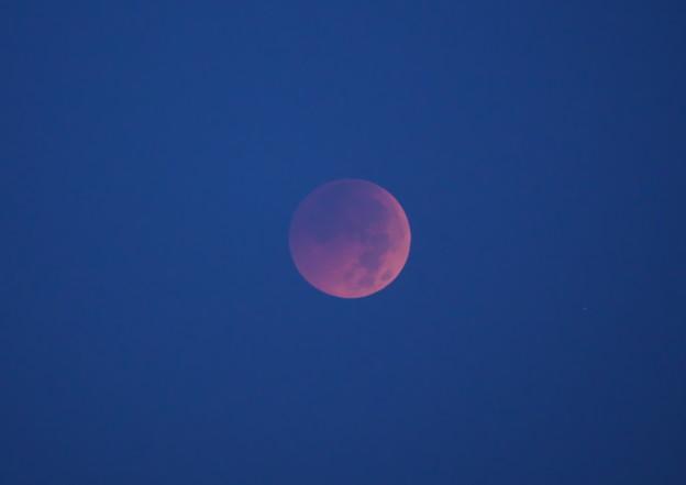 写真: 今日の月食 皆既中