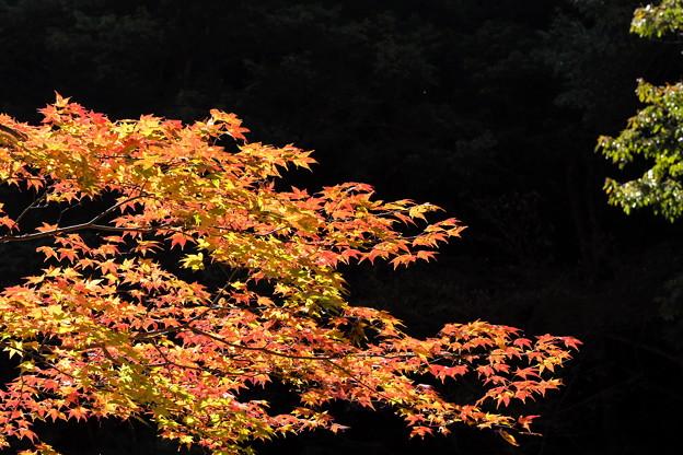 三段峡の秋(2)
