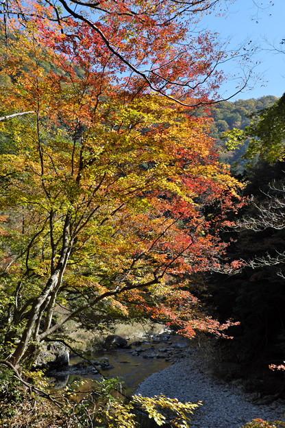 Photos: 秋の三段峡にて