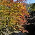 写真: 秋の三段峡にて