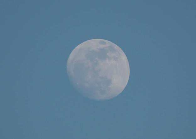 19年1月19日 青空の中の月