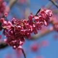 春色(1)