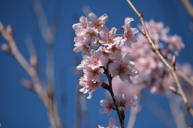 Photos: 春色(2)