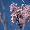 写真: 春色(2)