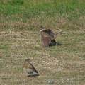 Photos: 野鳥も恋の季節