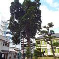 1510131195出島の木(1)