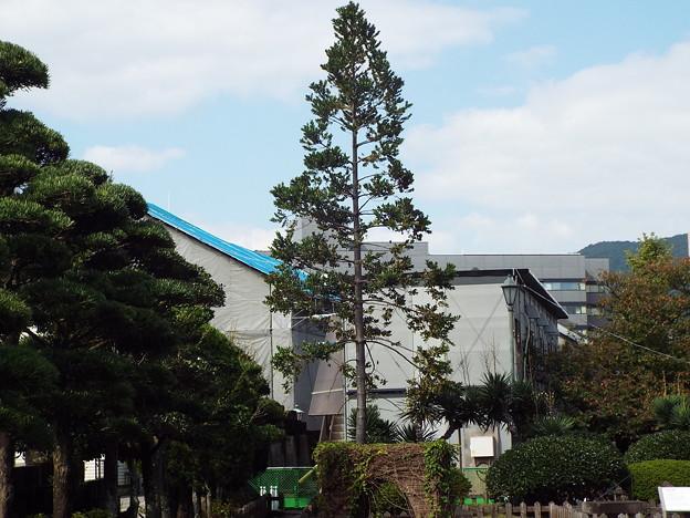 1510131198出島の木(2)