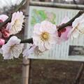 Photos: 蓮久XB10-010 1603080059