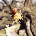 写真: 1802190050酈懸梅B5-067花