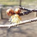 写真: 1802190052酈懸梅B5-067花