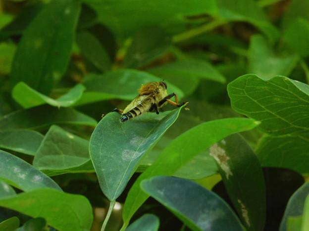 ハチ?DSCN5451