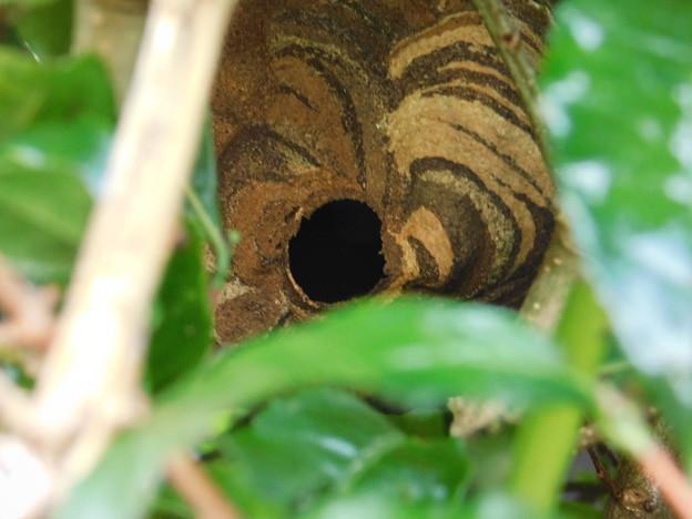 スズメバチの巣DSCN7212