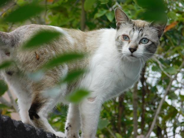 猫DSCN7193