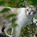 写真: 猫DSCN7193