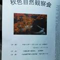DSCN1337猿ケ城渓谷