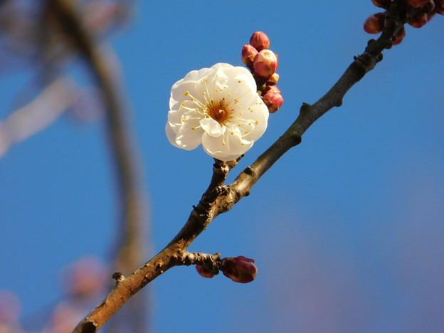 Photos: 八重冬至C9-052DSCN4638