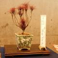 写真: DSCN4914錦糸南天