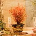 写真: DSCN4917錦糸南天