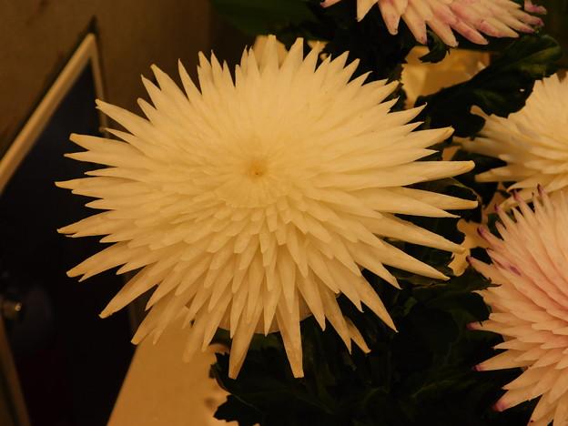 DSCN4965茨城民芸大根むき花保存会