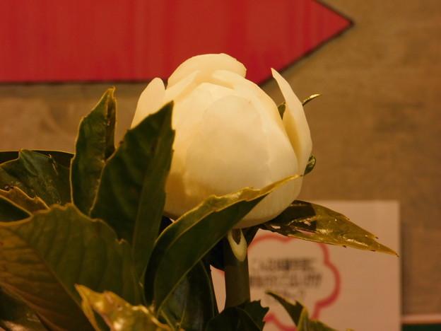 DSCN4969茨城民芸大根むき花保存会