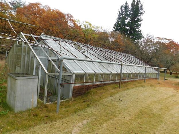 DSCN2740栽培温室