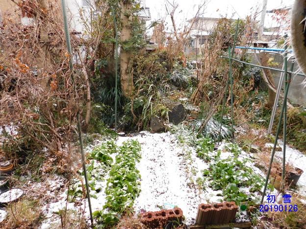 初雪DSCN5528mj