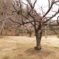 Photos: チャボ冬至C8-003DSCN6396