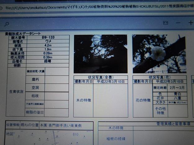 緑萼B9-133なのに月影DSCN6659