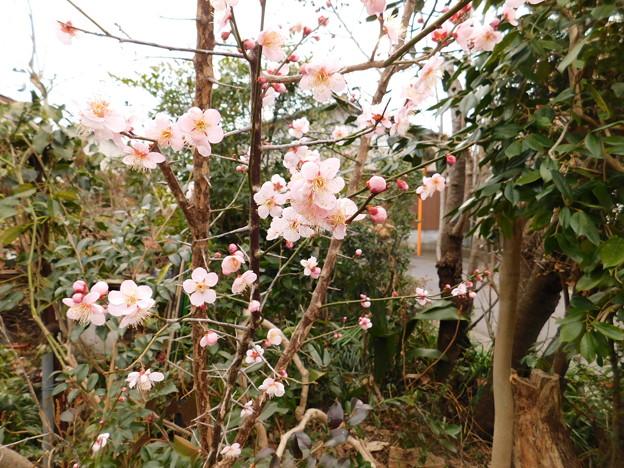 紅冬至・庭DSCN6822