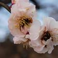 Photos: 寿TA5-126DSCN7190