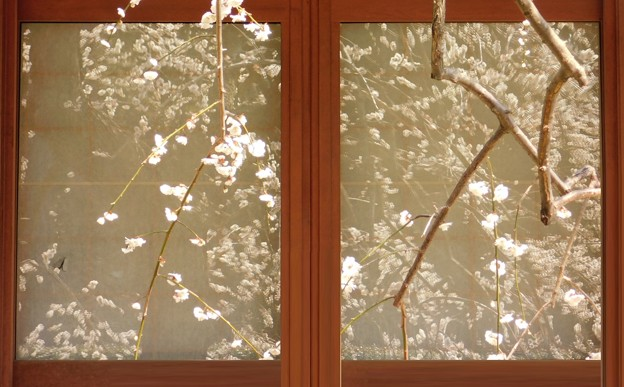 窓越しの白滝枝垂DSCN7969 (2)ppp