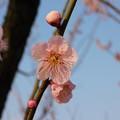 Photos: 紅冬至・秋篠宮DSCN8052