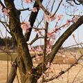 Photos: 紅冬至・秋篠宮DSCN8053