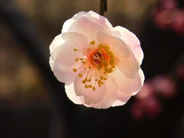 八重旭・吐玉泉下DSCN8022