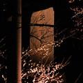 DSCN8417偕楽橋から茨城百景碑
