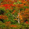 色付く木々(1)