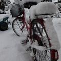 Photos: 雪国に・・・