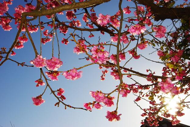 我が家の春~(^^♪