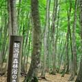 Photos: 美人林