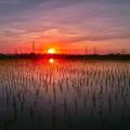 写真: 日の出